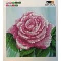 Розова роза, SI-575
