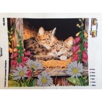 Котенца, ЧВ - 2306