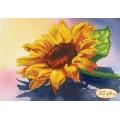 Слънчогледов цвят, ТМ-014